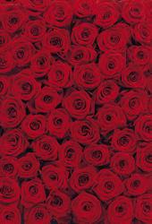 Red Roses Mural