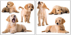 Puppies Wall Stickers