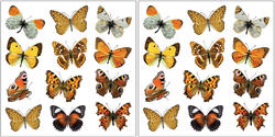 Colorful Butterflies Wall Stickers