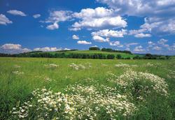 Meadow Mural