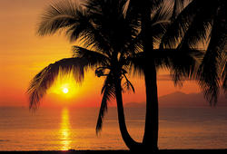 Palmy Beach Sunrise Mural