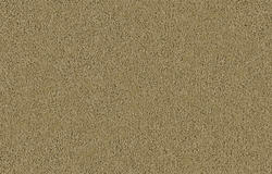 Citation Hardee Frieze Carpet 12 Ft Wide