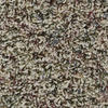 Citation Moselle Texture Frieze Carpet 12 Ft Wide
