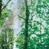 Gila® Safety Film Window Film  3' x 7'