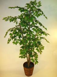 6.5' Designer Ficus Tree