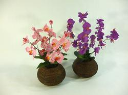 Orchid - Assorted styles