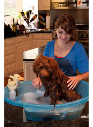 Pet Gear Ocean Blue Pup Tub