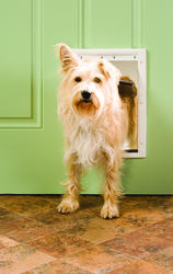 "PetSafe 8.12"" x 12.25"" Medium Premium White Plastic Pet Door"