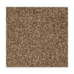 Shaw Grand View Frieze Carpet 12 Ft Wide