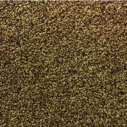 Shaw Woodbury Frieze Carpet 12 Ft Wide