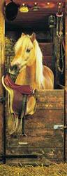 Dreamy Pony