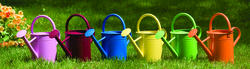 Enchanted Garden™ 1-Gallon Watering Can (Assorted Colors)