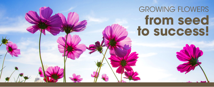 Growing Flowers from seed to success!