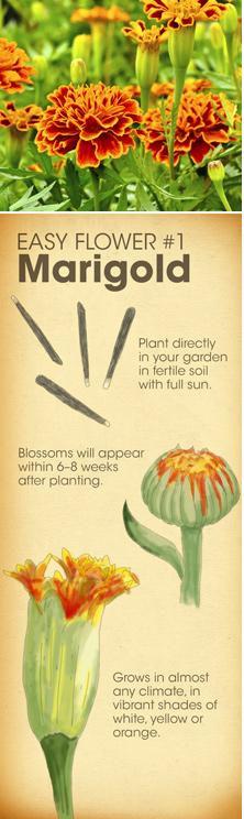 Easy Flower #1 - Marigold