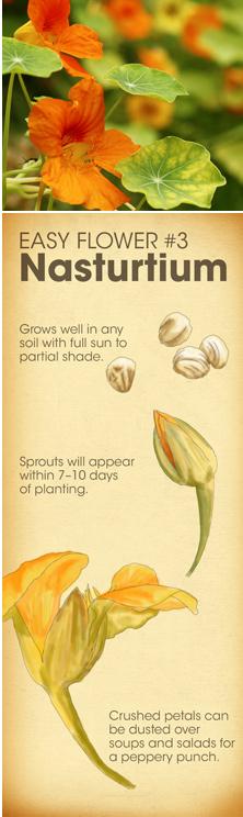 Easy Flower #3 - Nasturtium