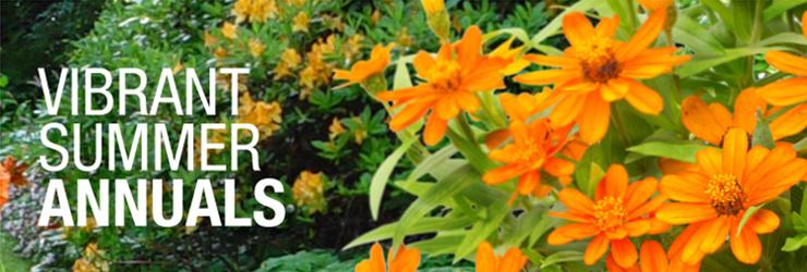 Vibrant Summer Annuals