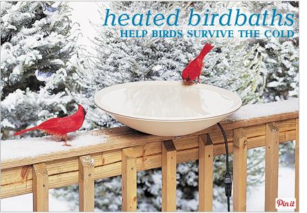 Heated birdbaths help birds survive the cold - Pin It
