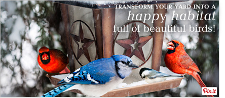 Transform your yard into a happy habitat full of beautiful birds - Pin It