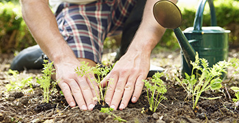 Get More from Your Garden with Companion Planting