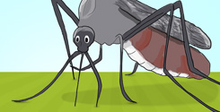 Easy Ways To Eliminate Mosquitoes In Your Yard