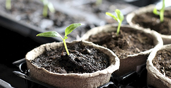 Get Started on Your Seed Setup