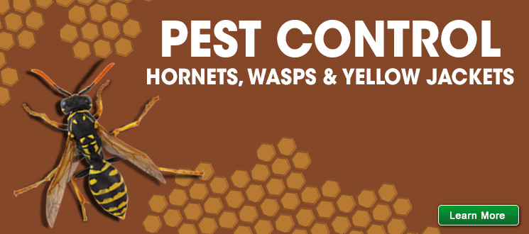 Hornet, Wasp & Yellow Jacket Control
