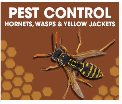 Pest Control Hornets, Wasps & Yellow Jackets