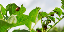 Protecting Your Garden From Insect Infestation