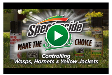 Video: Controlling Wasps, Hornets & Yellow Jackets