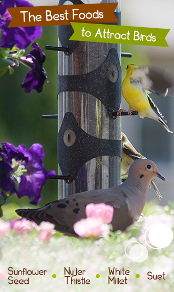 The Best Foods to Attract Birds