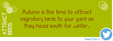 Autumn is the best time to attract migratory birds to your yard as they head south for winter.