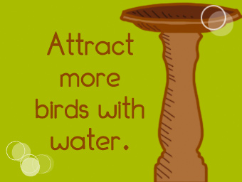 Attract more birds with water.
