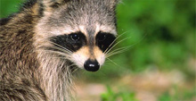 Animal Pest Control