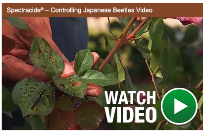 """Spectracide<span class=""""registered"""">&reg;</span> - Controlling Japanese Beetles Video"""