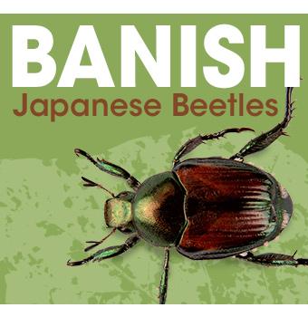 Banish Japanese Beetles