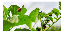 Protecting Your Garden From Insect Investation