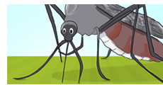 Easy Ways to Eliminate Mosquitoes From Your Yard
