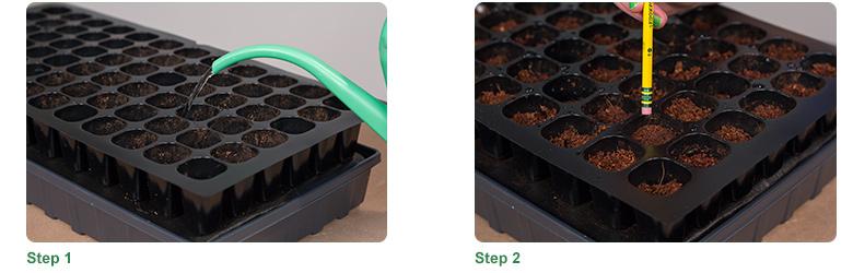 Step 1, Step 2
