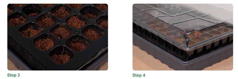 Step 3, Step 4