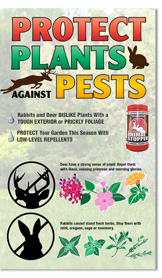 Protect Plants Against Pests
