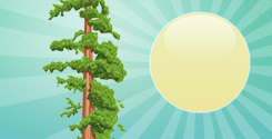 Top Tree Planting Tips