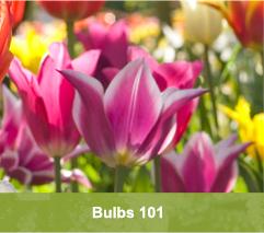 Bulbs 101