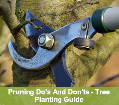 Pruning Do's and Don'ts