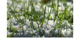 Get Your Lawn Ready to Weather the Winter