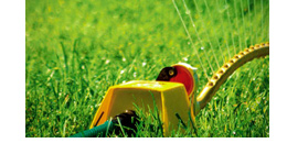 Your Lawn Questions Answered