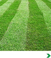 Shop All Lawn Care
