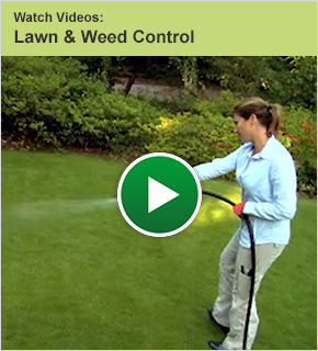 Watch Videos: Lawn and Weed Control