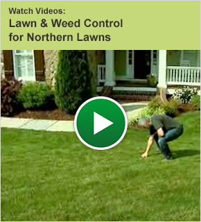 Watch Videos: Lawn and Weed Control for Northern Lawns