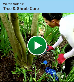 Watch Videos: Tree and Shrub Care