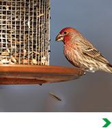 Bird & Wildlife & Accessories